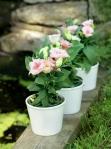 flower pots 0004